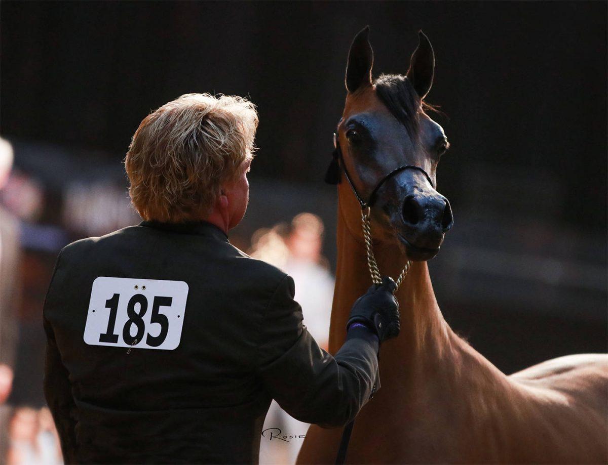 2019 Arabian Breeders World Cup The Arabian Horses Of